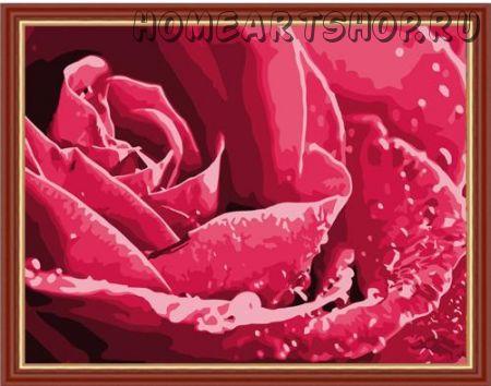 """Картина по номерам """"Нежность роз"""" 40х50"""