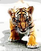 """Раскраска по номерам """"Маленький тигр"""""""